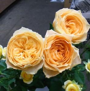 モンテビアンコ 咲いた花