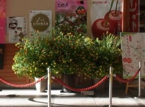 霞城セントラル 最上紅花