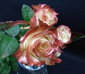 ブロンズ色に染めたバラ