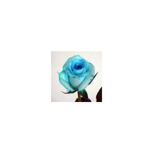 切り花着色剤(染色液) ファンタジー ブルー