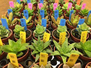 多肉植物1号サイズ