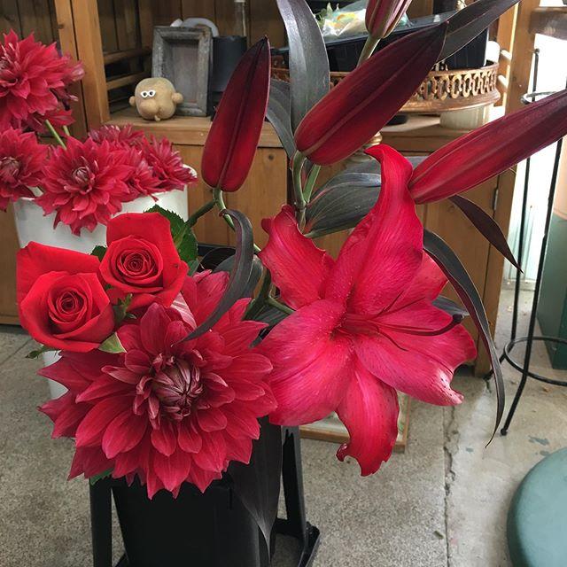 夏休みの自由研究に。お花を好きな色に染めてみませんか^_^よく見ると本来は赤じゃないものが写っています。こちらの画像は白い百合を染めました。使用したのはパレス化学 ファンタジー ルビーです。正直、百合をこんなにきれいに染めたことがなかったので、これほどきれいな赤になるとは思いませんでした。そばにあるダリアやバラとほぼ変わらない色です!#花の店ジョアン#自由研究#切り花着色剤ファンタジー#切り花着色剤ルビー