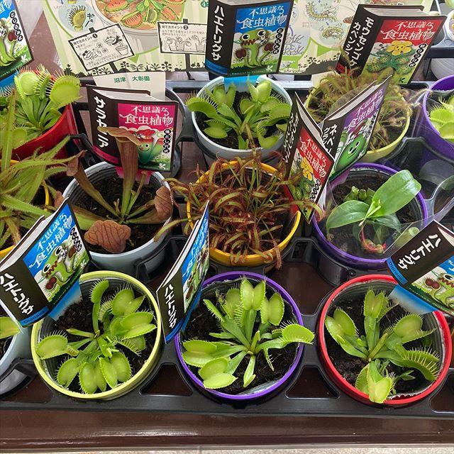 食虫植物入荷しました!#花の店ジョアン#食虫植物